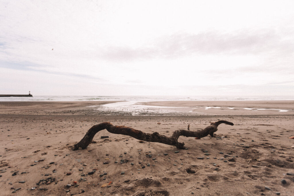 Large branch washed ashore near Berwick-upon-Tweed.