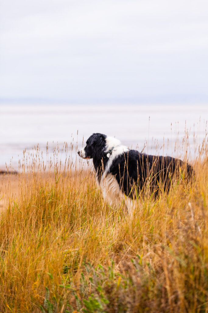 Overlooking one of the beaches near Western-super-Mare. He was the goodest of boys.