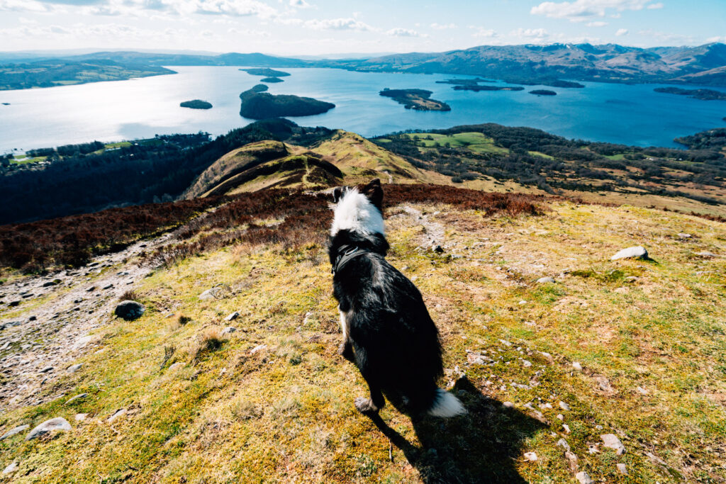 Loch Lomond from part way down Conic Hill